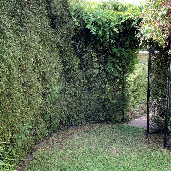 Garden Studio Scott Murison